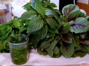 Mint and Basil © CKatt 2011