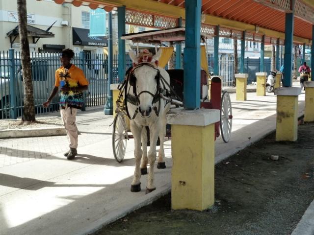 Nassau Bahamas Horse & Buggy © CKatt