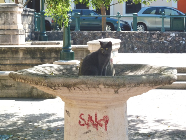 cat in a fountain