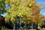 tree grey house