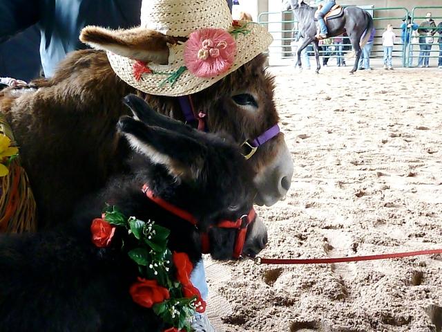 Donkeys at the Horse Fair