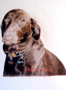 Last Stage of Maya the Chocolate Labrador Retriever's portrait by CKatt 2015