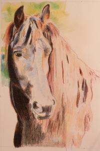Phase I Friesian Horse Portrait Copyright CKatt 2015