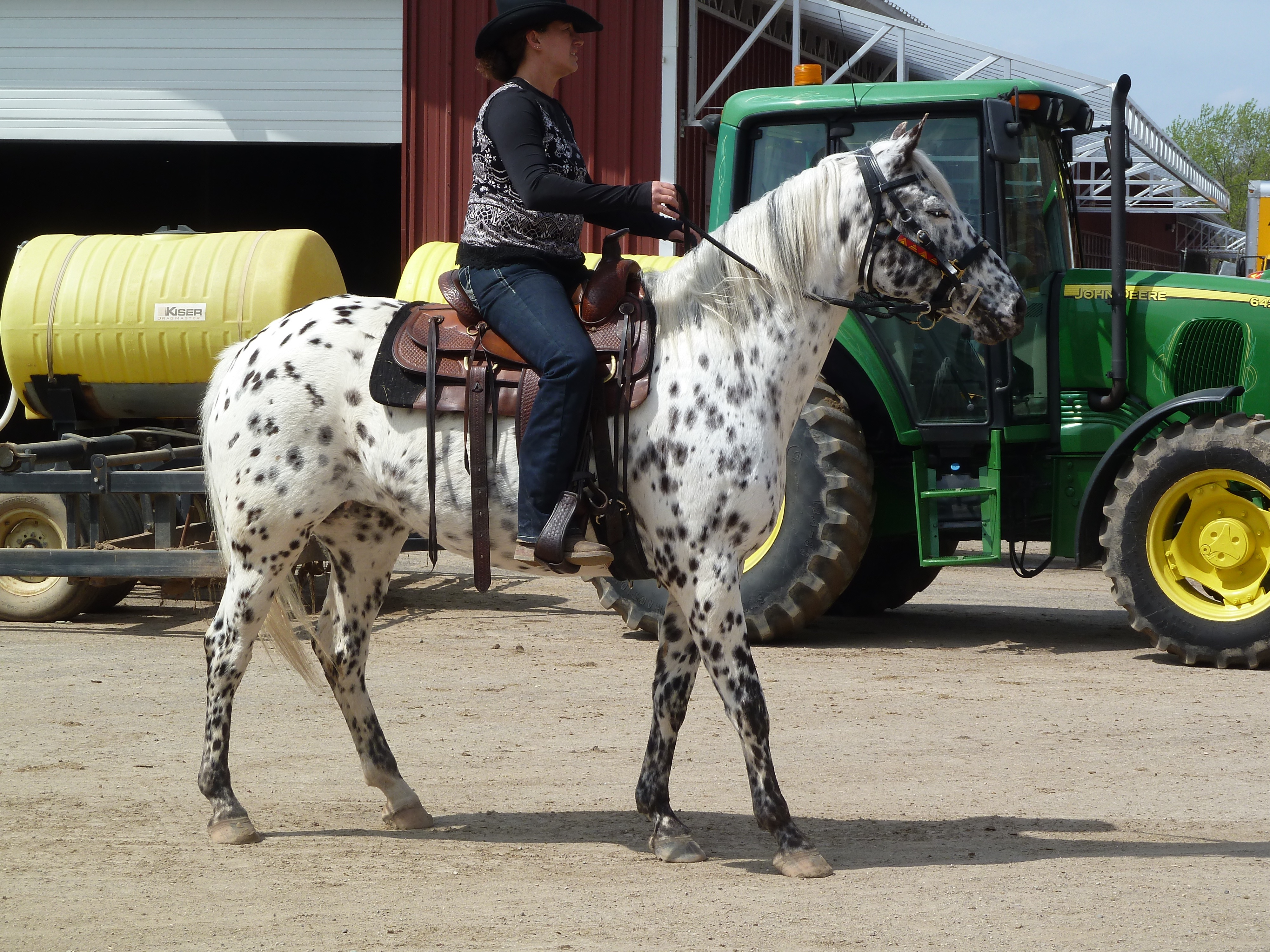 Minnesota Horse Expo 2016 Highlghts = 20 Years