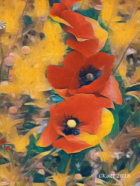 poppy-redone-art