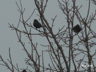 black-birds-3