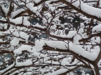 Winter in Minnesota - Snow on Branches - Copyright CKatt 2016