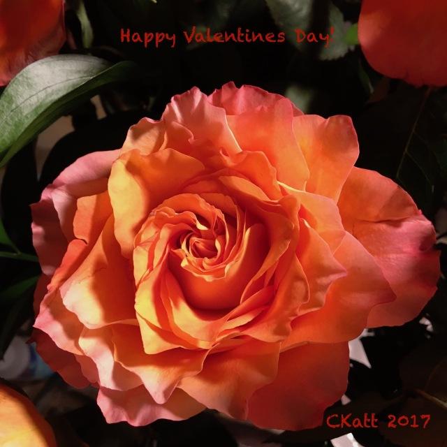 rose-vday