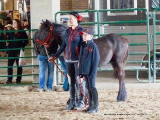 Fresian pony