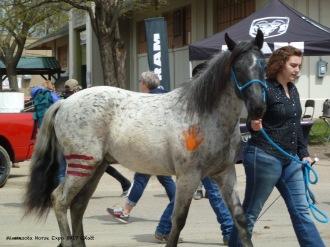 Horse of America