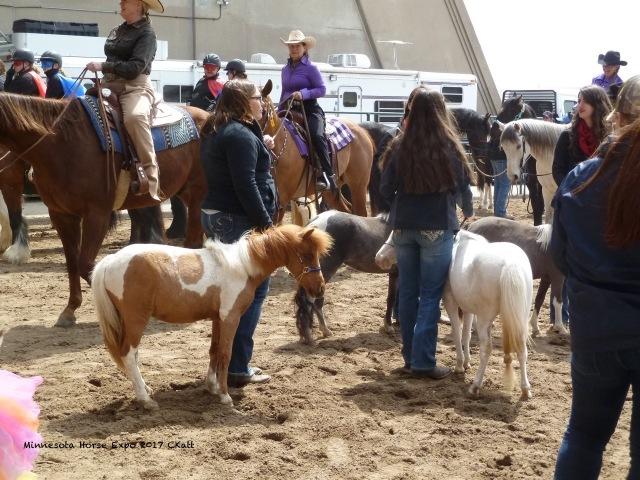 Minature Horse MNHE 2017