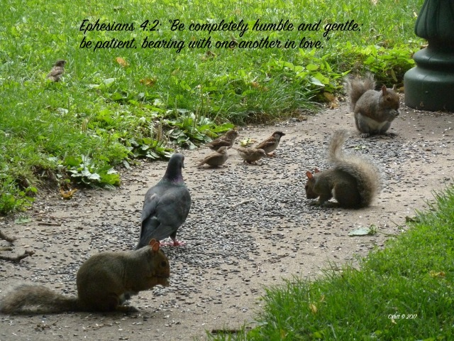 birds and squirrels bible quote