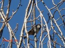 Spring sparrow CKatt 2017