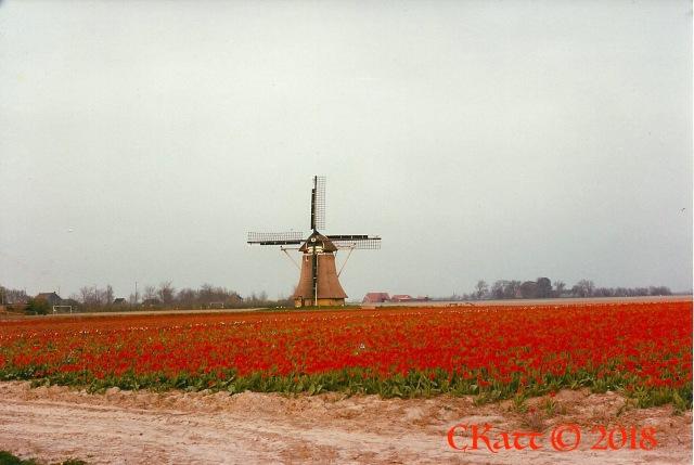 Tulip field Friesland