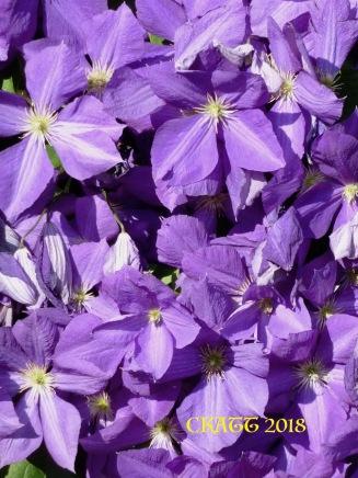 2018 Purple flower