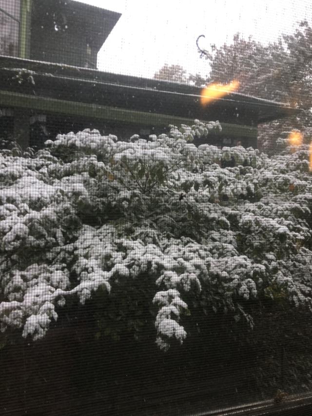 October 14 Snow copy