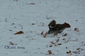 squirrels terring around in fo ckatt 2019