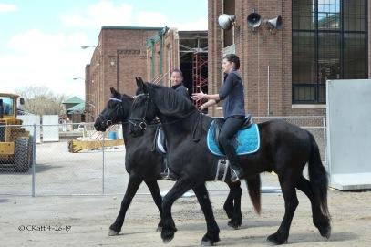 Freisian Horse Ckatt 4-26-19