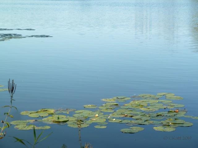 Lake of the Isles early summer ckatt 2019