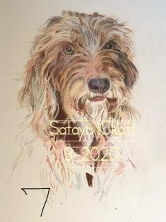 Sataya7 3-13-2020 CKatt