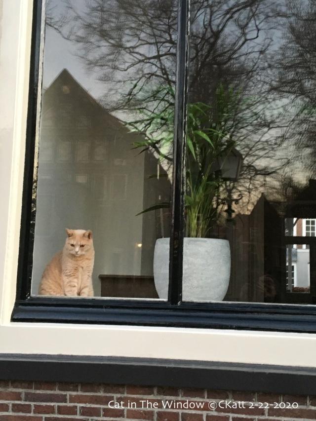 Cat in the Window Hoorn NL CKatt 2020