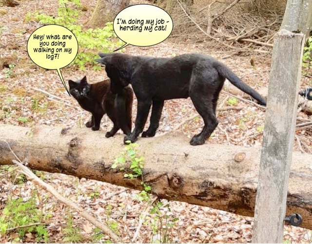 Tezz on the log with the cat 5-9-2020